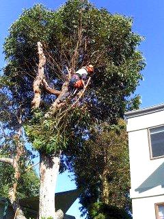 Professional Tree Care Services from Skyline Trees